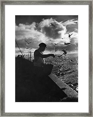 Feed The Birds Framed Print by Bert Hardy