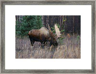 Framed Print featuring the photograph Feeding by Doug Lloyd