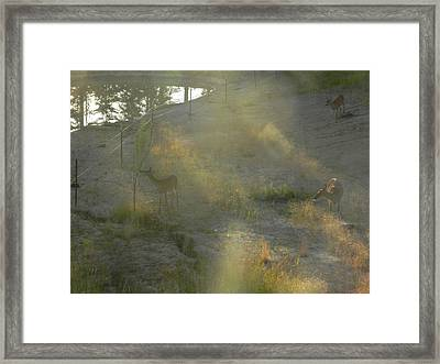Feeding In Light Of Early Morning Framed Print by Debbi Saccomanno Chan