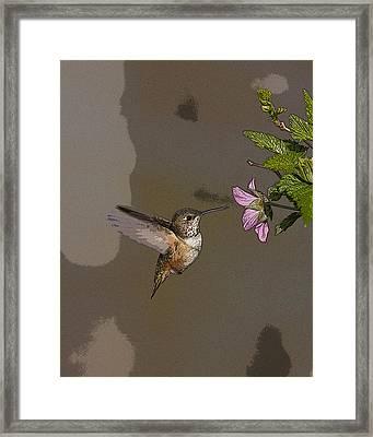 Feeding Rufus Hummingbird- Abstract Framed Print by Tim Grams