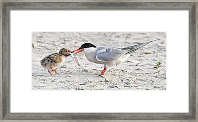 Feeding Time Framed Print by Dave Mills