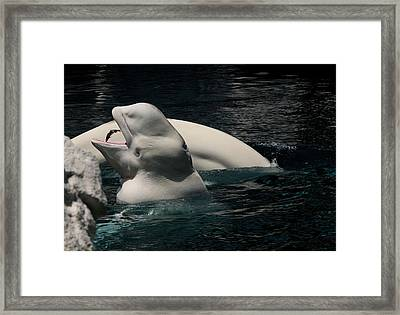 Feeding Time Framed Print by Karen Harrison