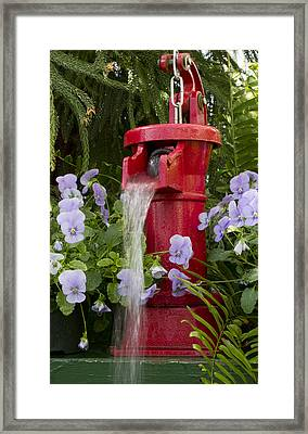 Feeding Time Framed Print by Peter Chilelli