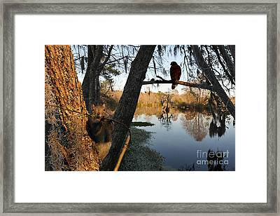 Framed Print featuring the photograph Feel Like Being Watched by Dan Friend