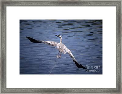 Feeling Like A Phoenix Again Framed Print by Danuta Bennett