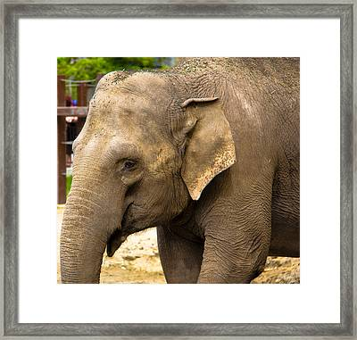 Feeling Sad Framed Print