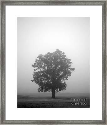 Feeling Small Framed Print by Amanda Barcon