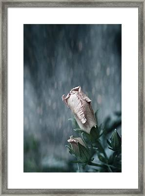 Feels Like The First Time Framed Print by Laurie Search