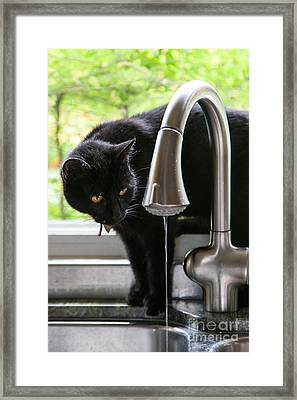 Feline Fascination Framed Print