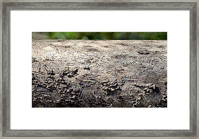 Fell By The Mighty Bark Beetle Framed Print