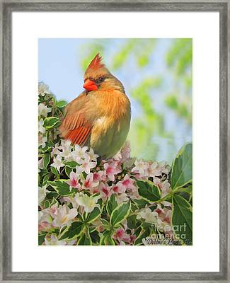 Framed Print featuring the photograph Female Cardnial In Wegia Digital Art by Debbie Portwood