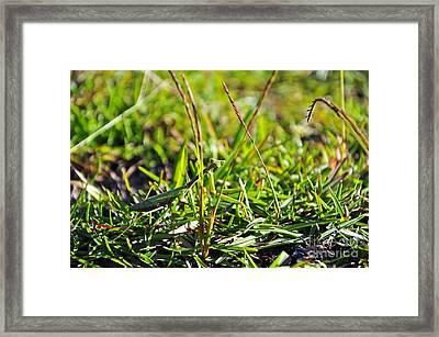 Female Mantis Framed Print by Al Powell Photography USA