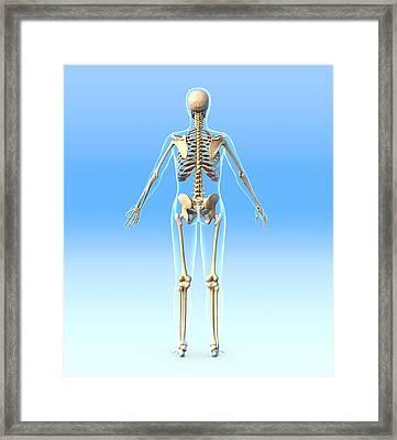 Female Skeleton, Artwork Framed Print by Roger Harris