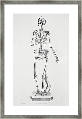 Female Skeleton Framed Print by Sheila Terry