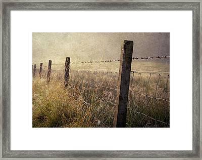 Fence And Field. Trossachs National Park. Scotland Framed Print by Jenny Rainbow