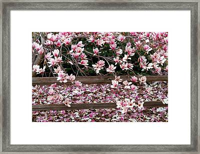 Framed Print featuring the photograph Fence Of Flowers by Elizabeth Winter