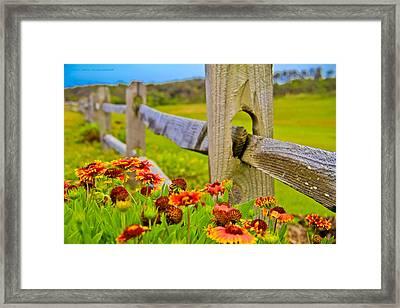 Fence Side Flowers Framed Print by Virag Yelegaonkar