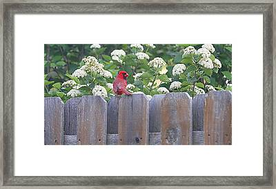 Framed Print featuring the photograph Fence Top by Elizabeth Winter