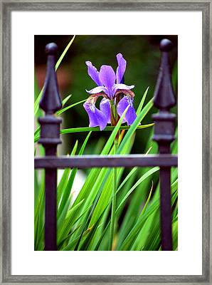 Framed Print featuring the photograph Fenced In by Amee Cave