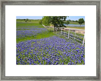 Framed Print featuring the photograph Fenceline Flowers by Lynnette Johns