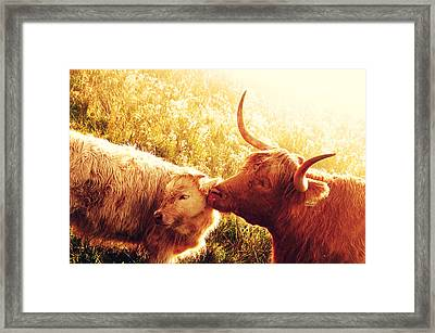 Fenella With Her Daughter. Highland Cows. Scotland Framed Print