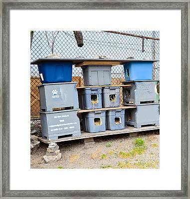 Feral Cat Shelter Framed Print by Photo Researchers