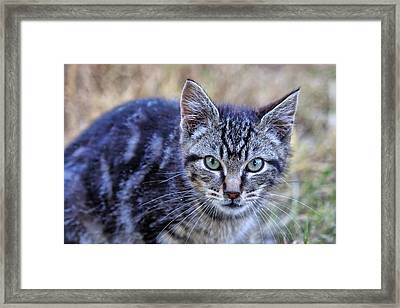 Feral Kitten Framed Print