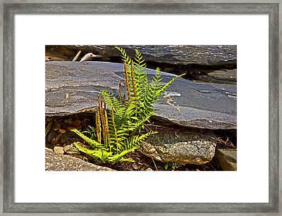 Fern And Rocks Framed Print by Susan Leggett