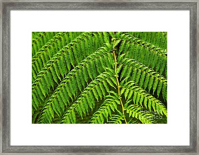 Fern Fronds Framed Print by Carlos Caetano