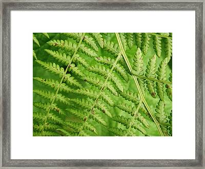 Fern Green Framed Print by Cheryl Perin