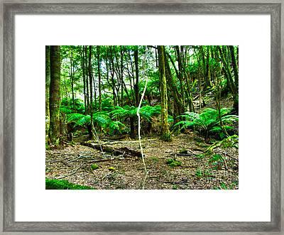 Fern Grove Framed Print by Joanne Kocwin