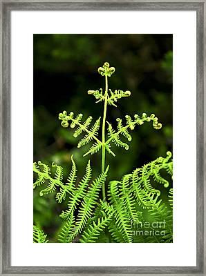 Fern Leaf Framed Print by Elena Elisseeva