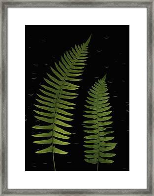 Fern Leaves With Water Droplets Framed Print by Deddeda