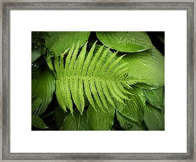 Fern On Top Framed Print by Nafets Nuarb