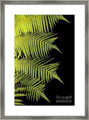 Fern Palm Framed Print
