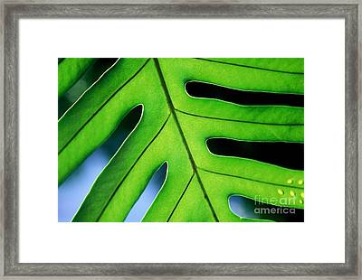 Framed Print featuring the photograph Fern by Ranjini Kandasamy