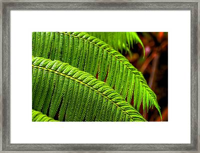 Fern Framed Print by Ryan Wyckoff