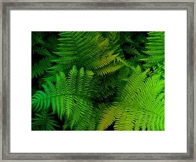 Fern Framed Print by Shweta Singh
