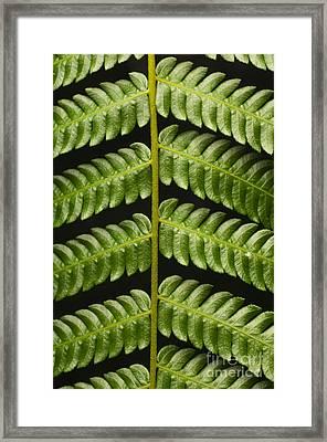 Fern Tendril Framed Print by Raul Gonzalez Perez