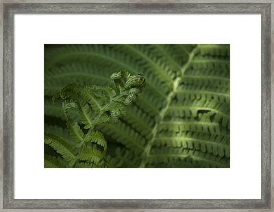 Fern Unfolding Framed Print