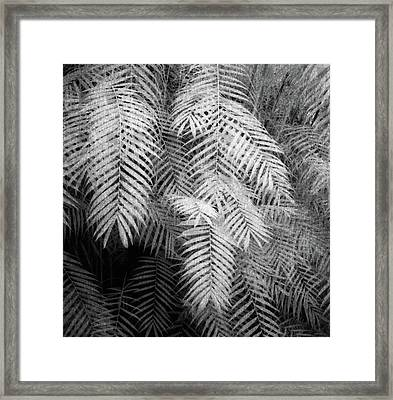 Fern Variations In Infrared Framed Print by Andreina Schoeberlein