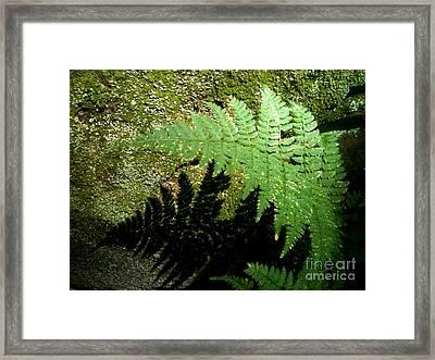 Fernish The Fun Framed Print by Trish Hale