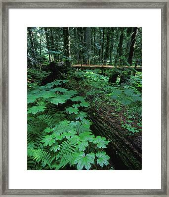 Ferns And Bushes On Forest Floor Framed Print by Don Hammond