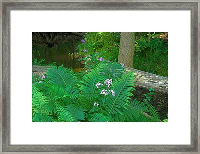 Ferns And Phlox Framed Print