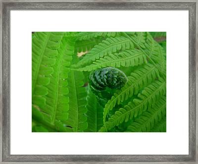 Ferns Fine Art Prints Green Forest Fern Framed Print
