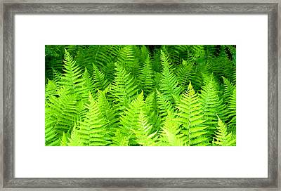 Ferns Galore Filtered Framed Print