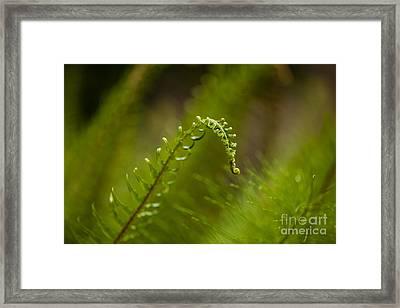Ferns Framed Print by Mike Reid
