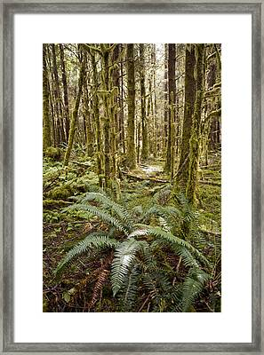 Ferns Sit On The Forest Floor Framed Print by Taylor S. Kennedy
