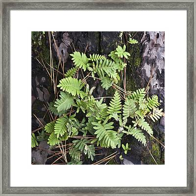 Ferns Squared Framed Print