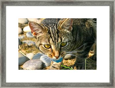 Ferocity Framed Print by Katie Williams